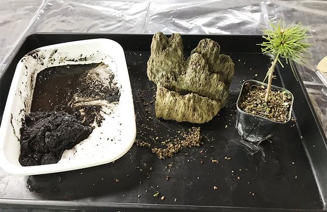 盆栽づくりの途中経過