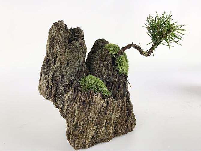 切り立つ岩山の黒松