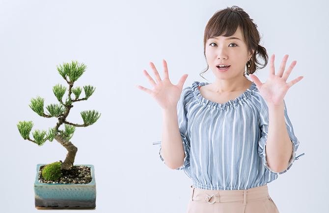 サプライズ盆栽