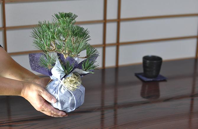 盆栽のプレゼント