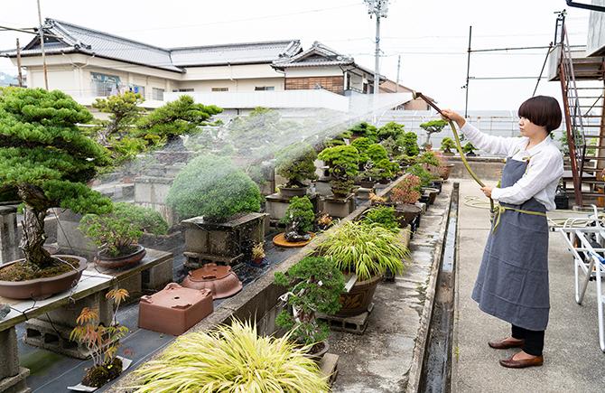 盆栽園の風景