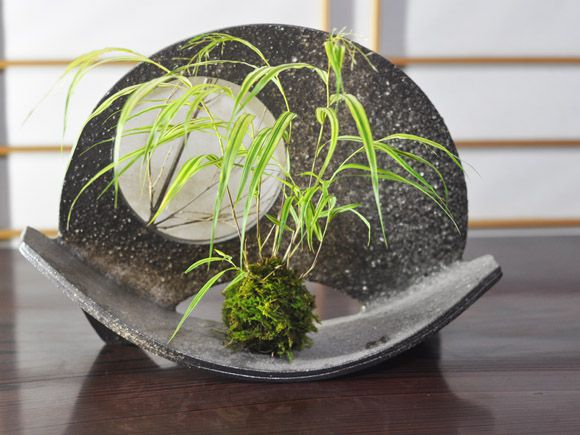 フウチソウの苔玉