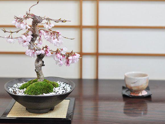 十月桜 机の上