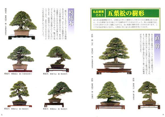五葉松の育て方書籍 樹形ページ