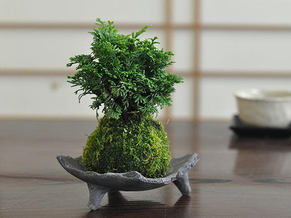ひのきの苔玉