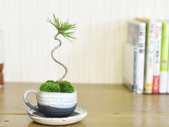 黒松ミニミニコーヒーカップ
