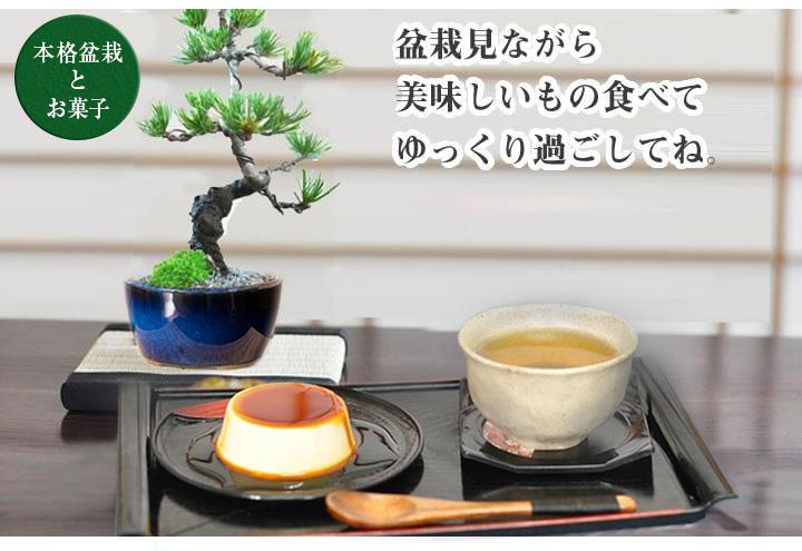 松とお菓子のセット