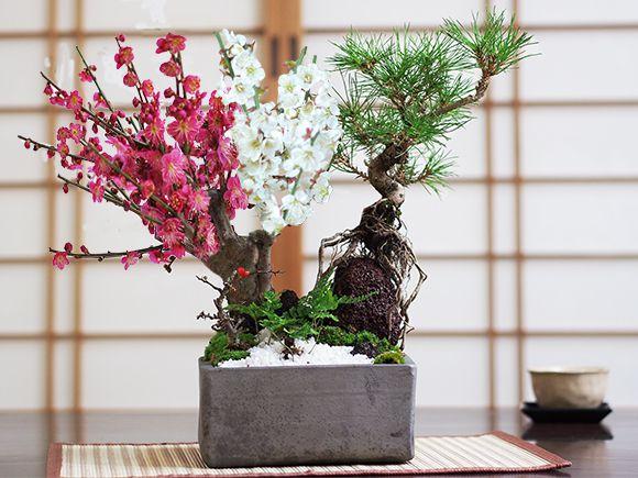 五葉松と紅白梅の寄せ植え