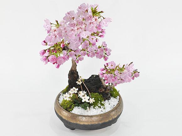 桜の和の庭