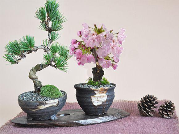桜と松のペアセット