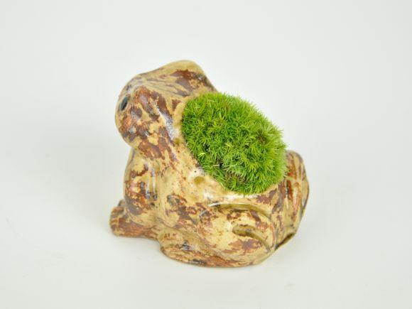 かえるの苔盆栽