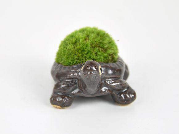 かめの苔盆栽