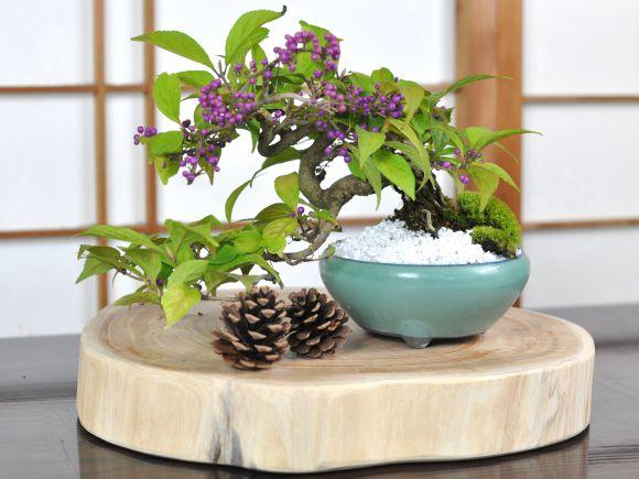 盆栽花台 けやき 丸 厚型 幅25~32cm