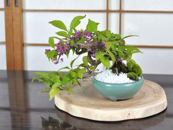盆栽花台 けやき 丸 薄型 幅16~30cm