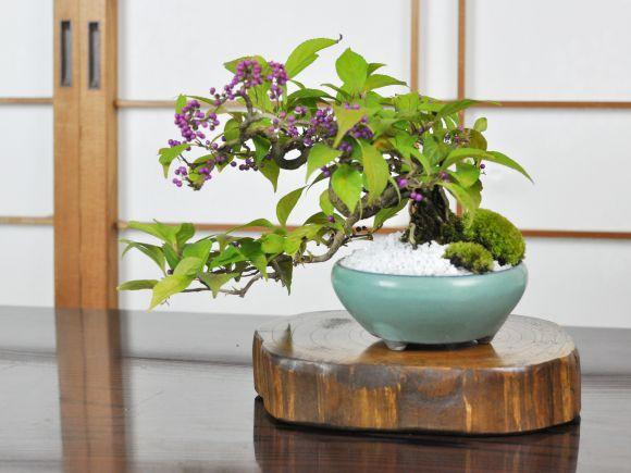 盆栽花台 けやき 艶 丸形 大 幅18~22cm