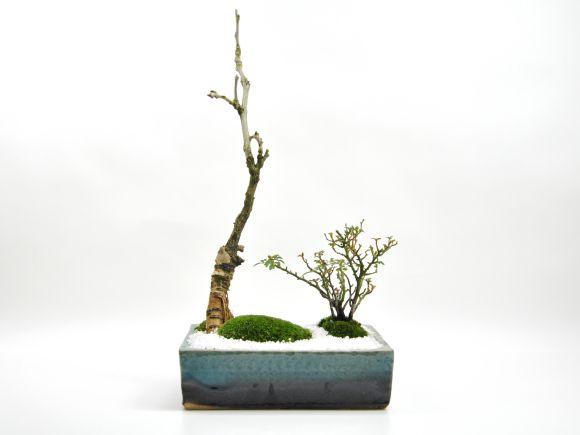 藤とバラの寄植え