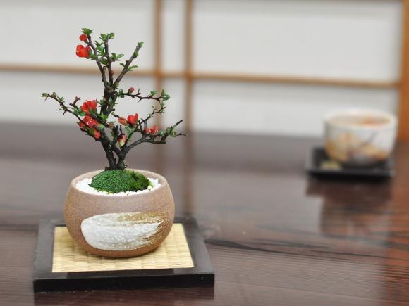 長寿梅 万古焼 ハケメ丸 3号【敷板付き】