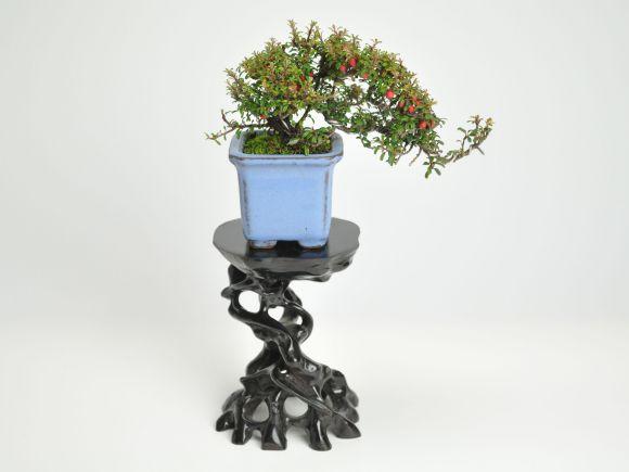 盆栽用飾り棚 根卓