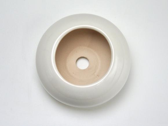 白3.5号 鉢幅約11.cm×高さ約7cm