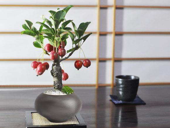 父の日 ミニりんご 黒丸和鉢