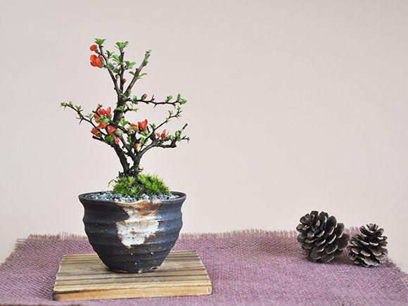 長寿梅 黒かま手造り丸鉢
