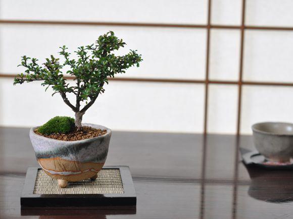 長寿の植物