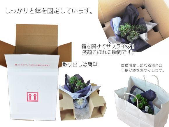 盆栽ギフトの梱包