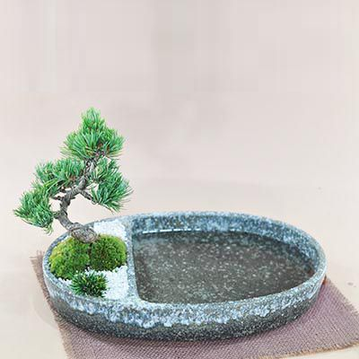 和の庭 池泉庭園