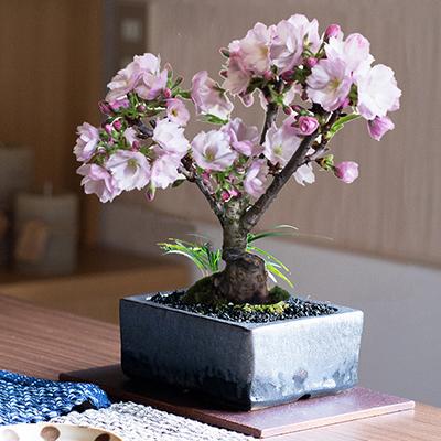 桜盆栽 和モダン金彩