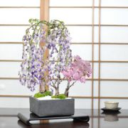 藤と桜の寄植え 信楽焼 瓦鉢正角