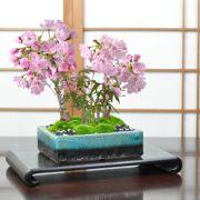 桜ともみじの寄植え