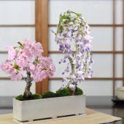 桜と藤のモダン寄植え 盆栽  シンプルライフシリーズ L