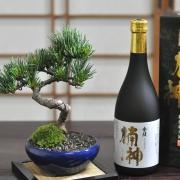 父の日 盆栽ギフト 五葉松と地酒のセット 育て方冊子&肥料付き【送料無料】