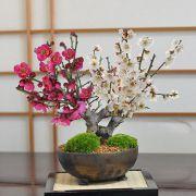 紅白梅大樹