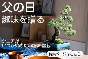 父の日 盆栽
