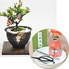 盆栽と道具セット